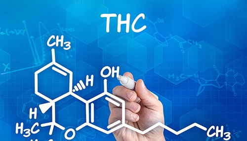 THC and the Human Brain